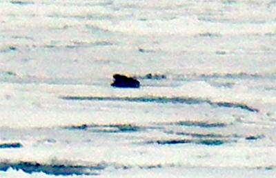 So what do YOU see? There are two walrus here.