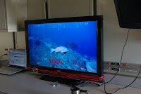 Fish on the screen from the ROV
