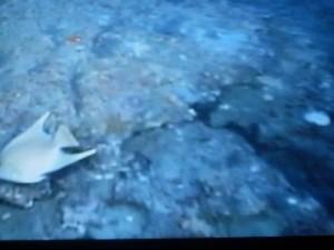 Seafloor ROV images