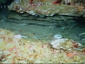 Rocky reefs from the ROV