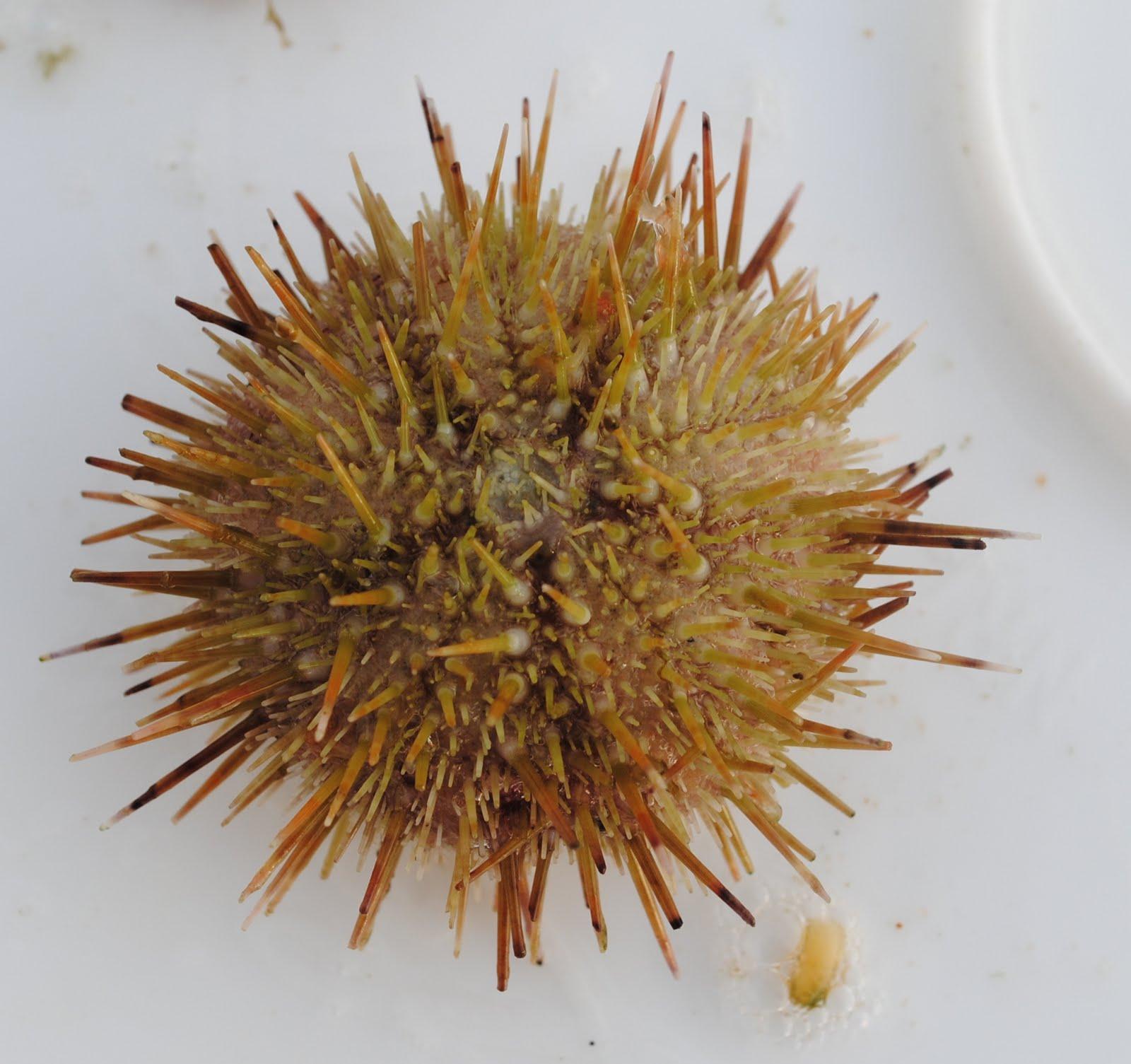Hermit Crabs | NOAA Teacher at Sea Blog