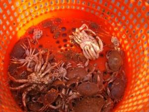 Bucket of Crabs