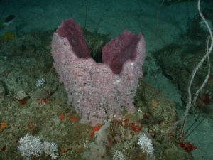 Purple sponge which looks like a jaw opening from the bottom.
