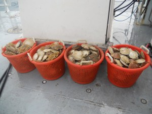 Basket of Scallops