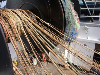 The end of the trawl net. These are the lines that basically hold on to the net!