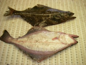 Arrowtooth flounder.