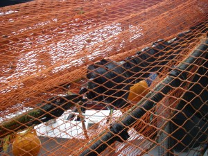 The mesh and the wheels of the bottom trawl.