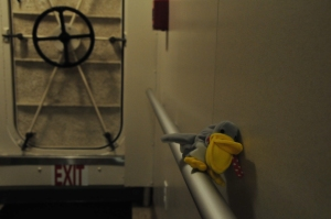 Stuffed pelican sitting on rail in hall