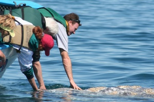 Chris Faist with a Gray Whale