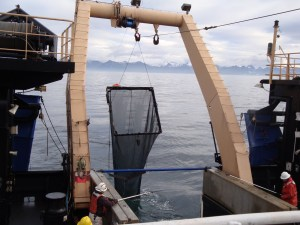 The Methot trawl being taken out of the water. Note the square frame.