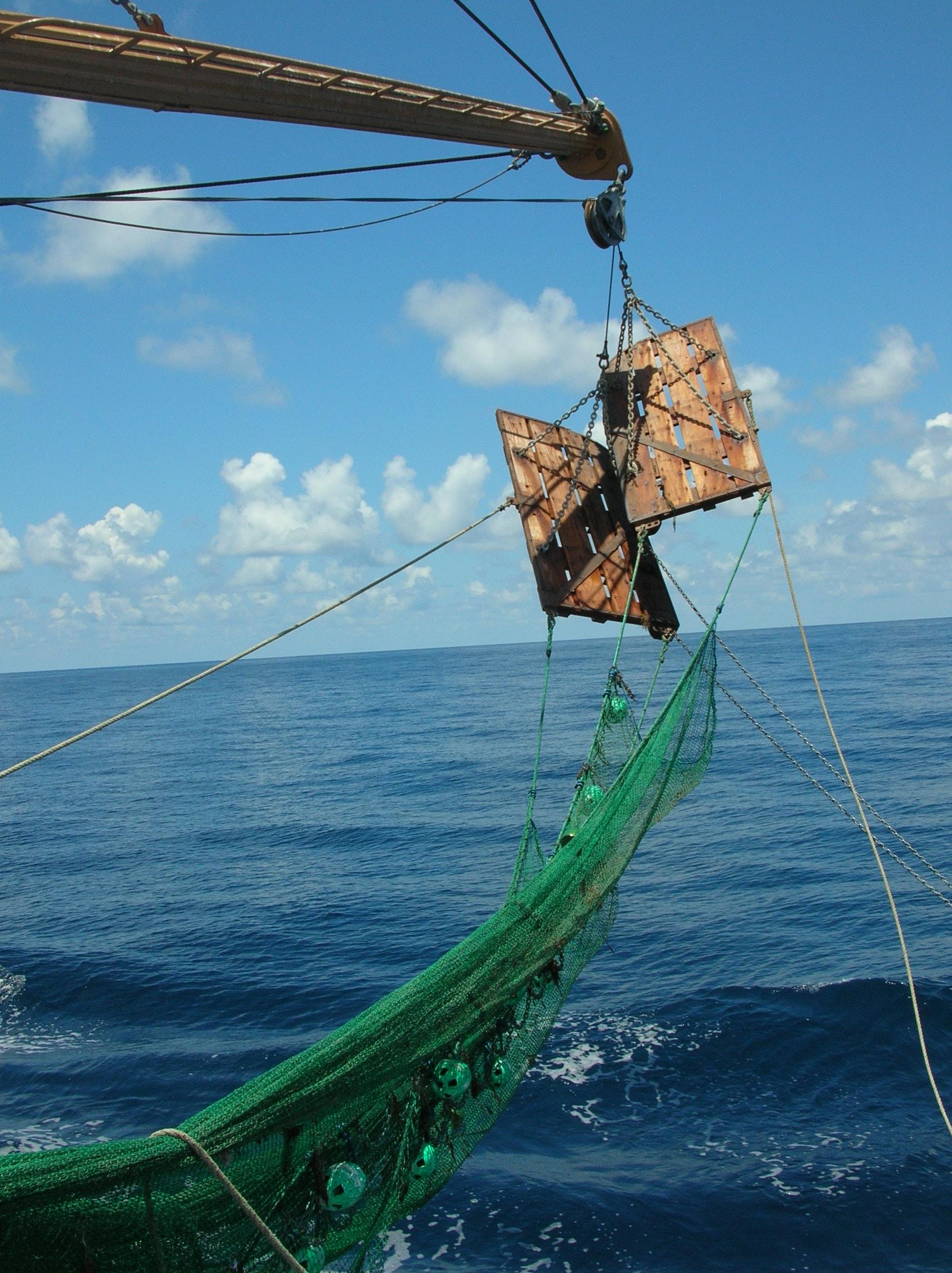 bycatch reduction device