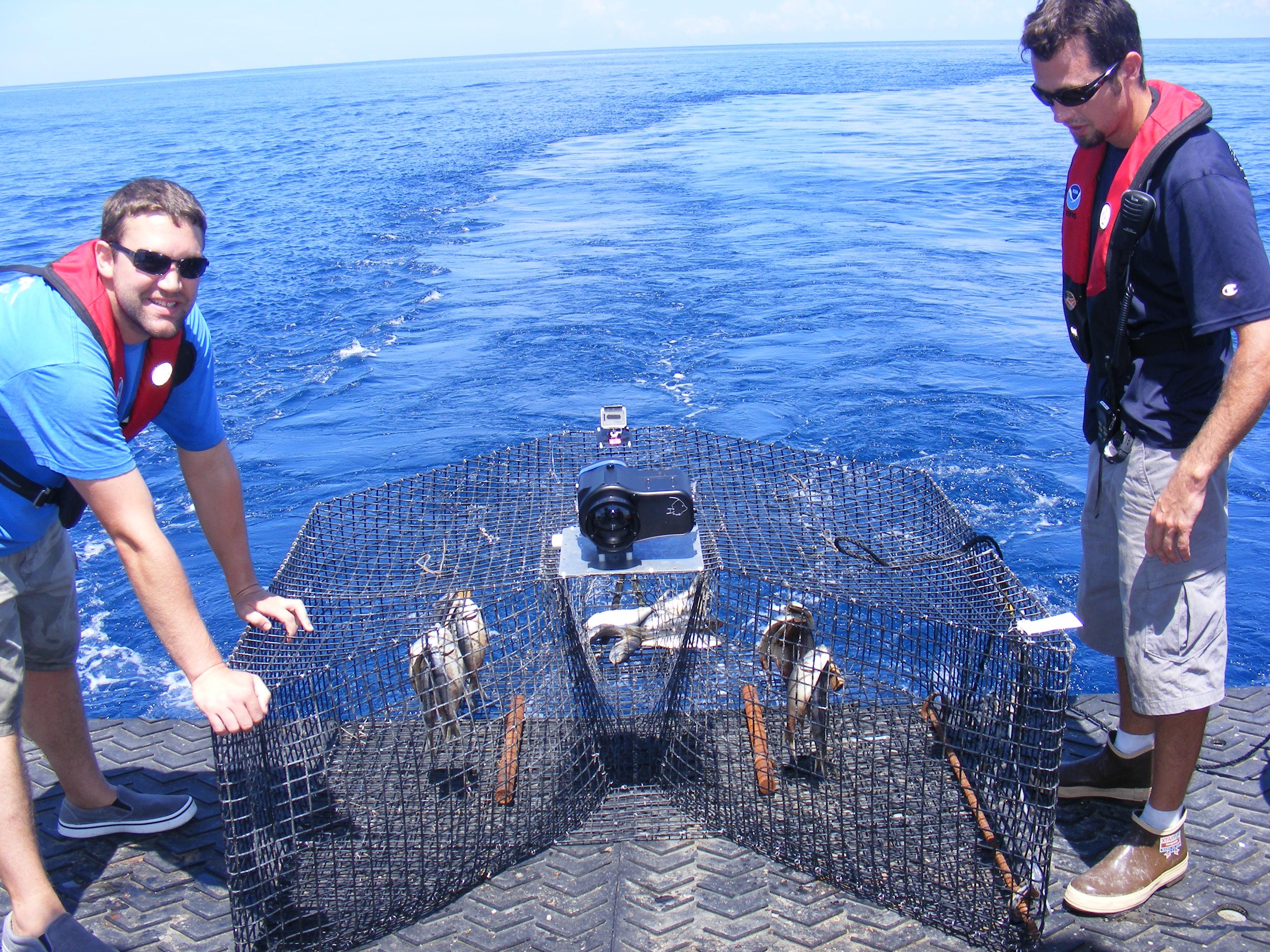 Fish traps noaa teacher at sea blog for Bait fish trap