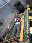 Mike, Fisherman, in the shark cradle- It is approximately 8 feet long.