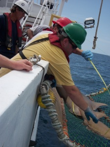 Mark Grace, Chief Scientist, and Adam, Scientist, measure a nurse shark in the cradle