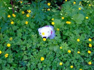 Mbear in the flowers