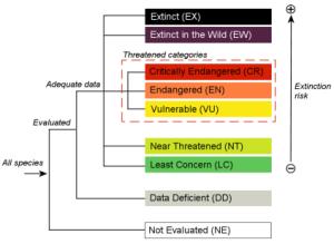 endangered species chart