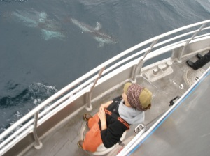 Pacific White-sided dolphins and Kaitlin