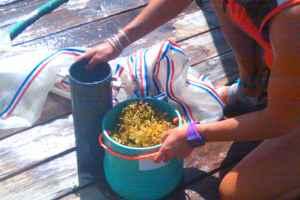 Chelsea gathering sargassum