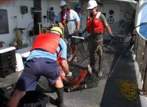 Crew member Kirk Perry observes as Investigators David Berrane and Dave Meyer empty catch of red snapper and black sea bass from chevron trap