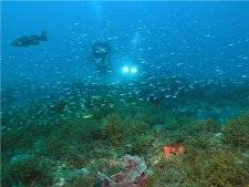 Divers exploring hardbottom habitat Photo Credit: Douglas E. Kesling, UNCWilmington, CIOERT