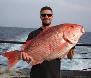 Chief Scientist Nate Bacheler and red snapper, Lutjanus campechanus Photo credit: David Hoke