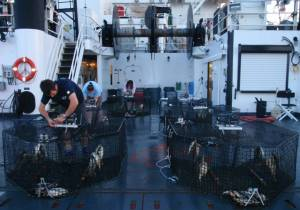 Science team adjusts camera-trap arrays on stern deck