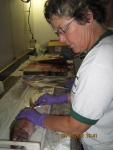 Teacher at Sea, Jennifer Fry examines and measures fish onboard NOAA ship Oscar Elton Sette