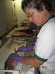 Teacher at Sea, Jennifer Fry examines and measures fish onboard NOAA ship Oscar Elton Sette