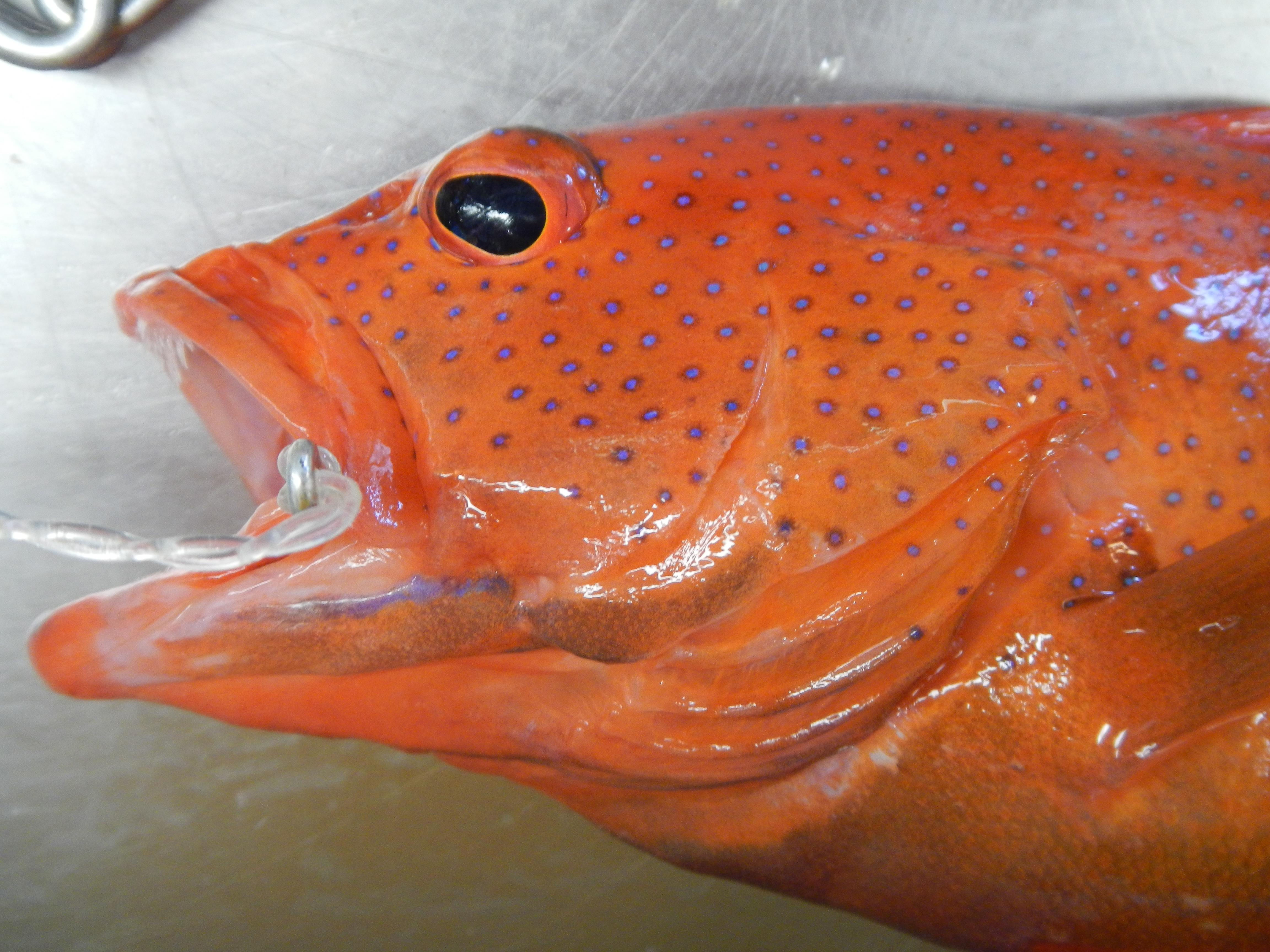 reef fish | NOAA Teacher at Sea Blog