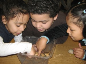 Kindergarteners Investigating Invertebrates