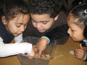 Kindergarteners Investigating Invertebrates
