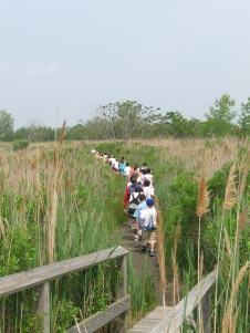 4th Grade Marsh Field Study