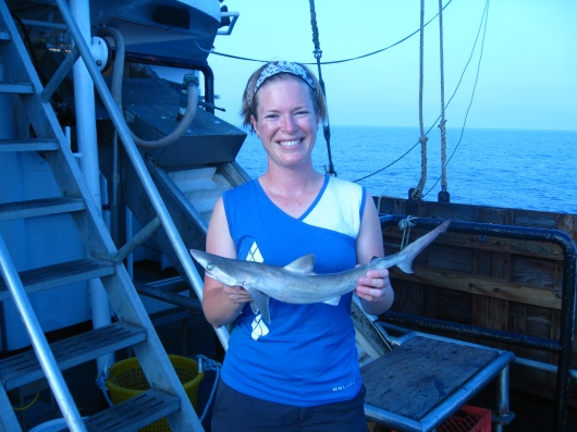 Atlantic sharpnose shark