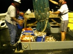 Bringing up the trawl- this was a big catch!