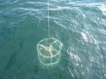 The CTD warming up just below the water's surface