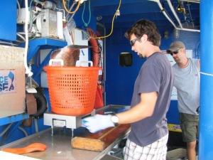 David is weighing the gag grouper, with Adam P. looking on