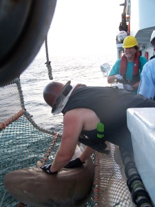 Nurse Shark in the cradle