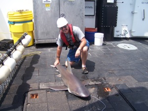 Sandbar Shark & Me