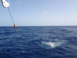 Dropped the net which collects zooplanktons in the ocean