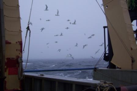 Look at all of these birds off the stern!  Why do you think they are following us?  Are we about to haul up a catch, perhaps?