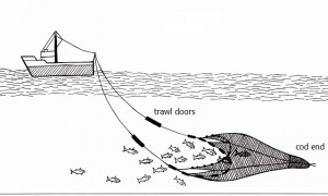 A typical midwater trawl