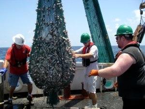 Big Catch - 380 kg