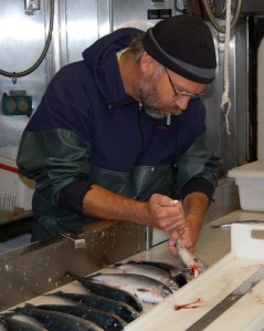 NOAA Fish Biologist Brian Beckman collect blood samples from salmon