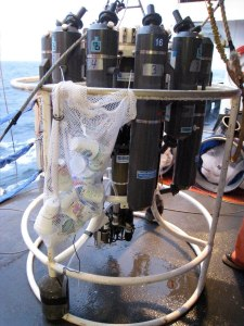 The CTD with the cups attached