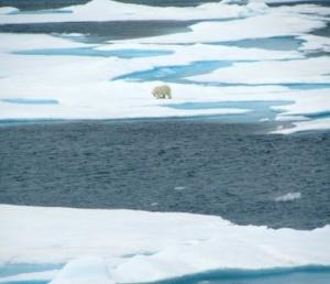 Polar Bear in the distance