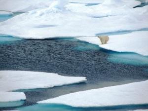 Polar Bear near the water