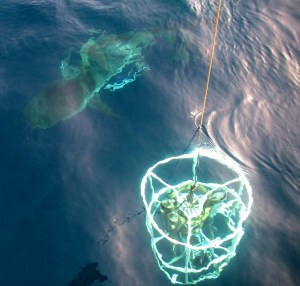 Here's a shark circling our CTD.
