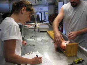 Measuring fish, recording data