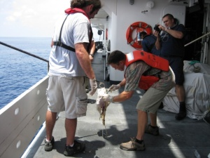 Getting DNA of the sperm whale