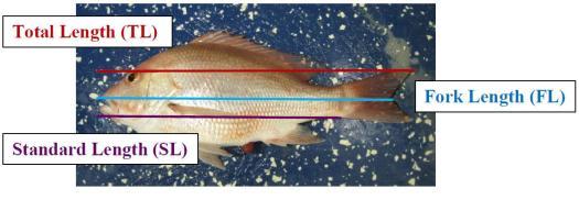 Diagram of fish lengths